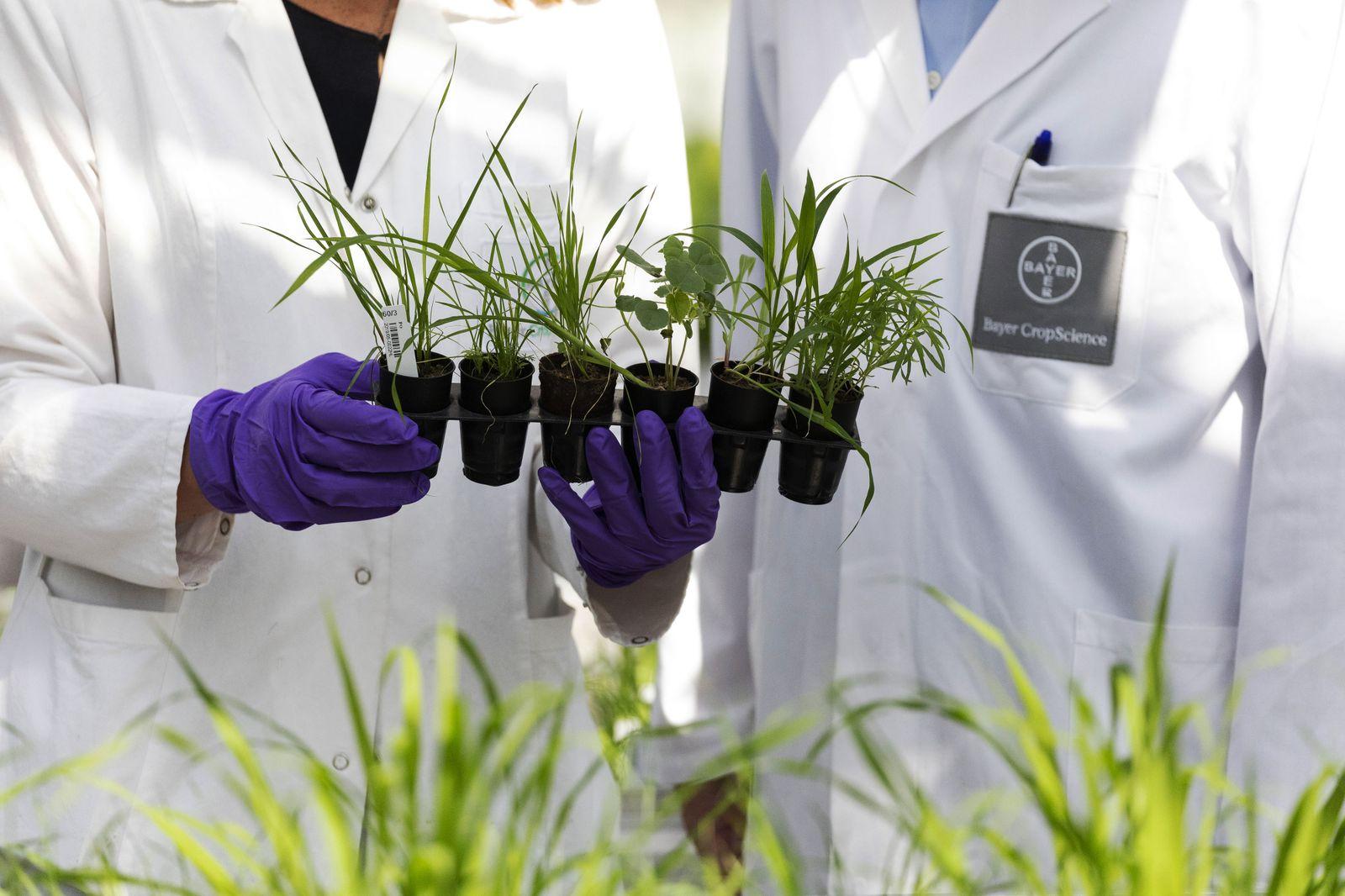 Bayer AG Pumps Billions of Euros Into Weedkiller Alternatives