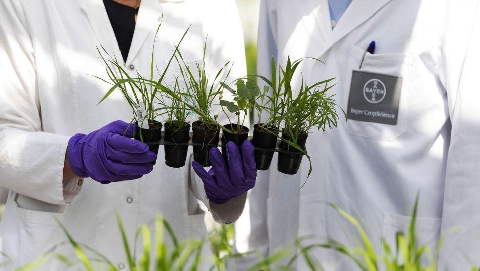 Pflanzen in Bayer-Gewächshaus: Für positive und »langlebige Narrative« zur Gentechnik sorgen
