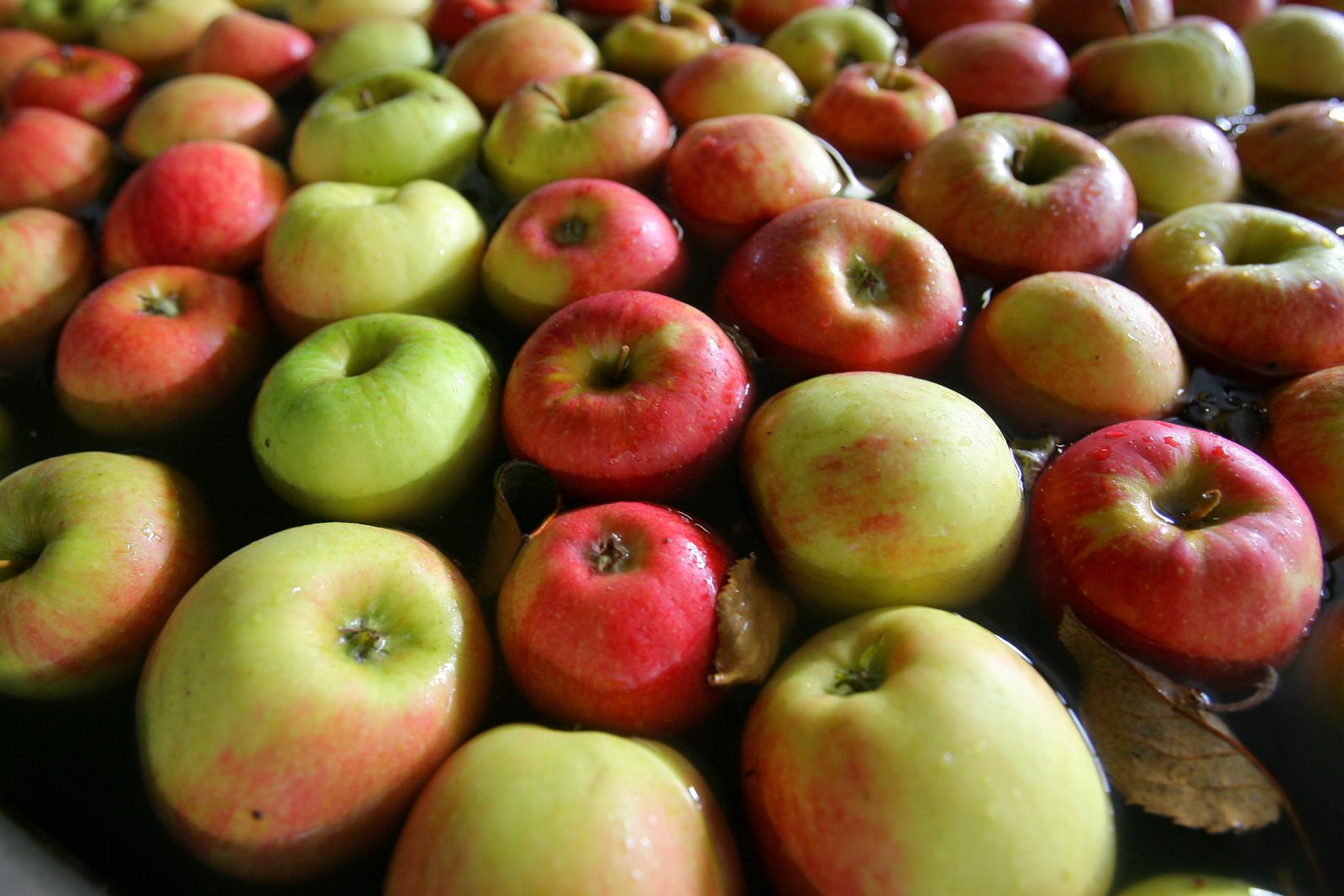 Mythenumranktes Kernobst: Genom des Apfels entziffert