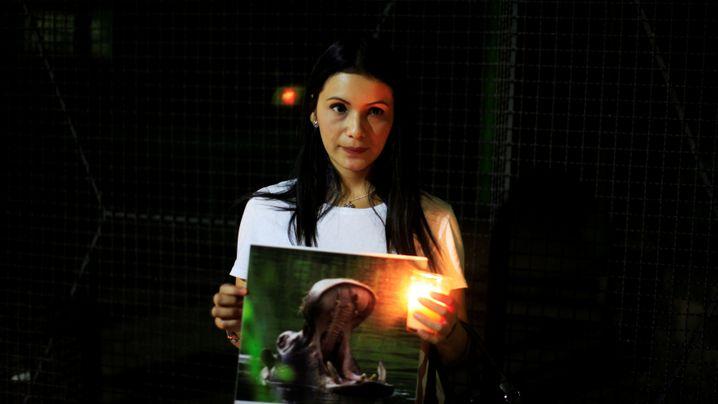 Getötetes Flusspferd: Trauer um Gustavito