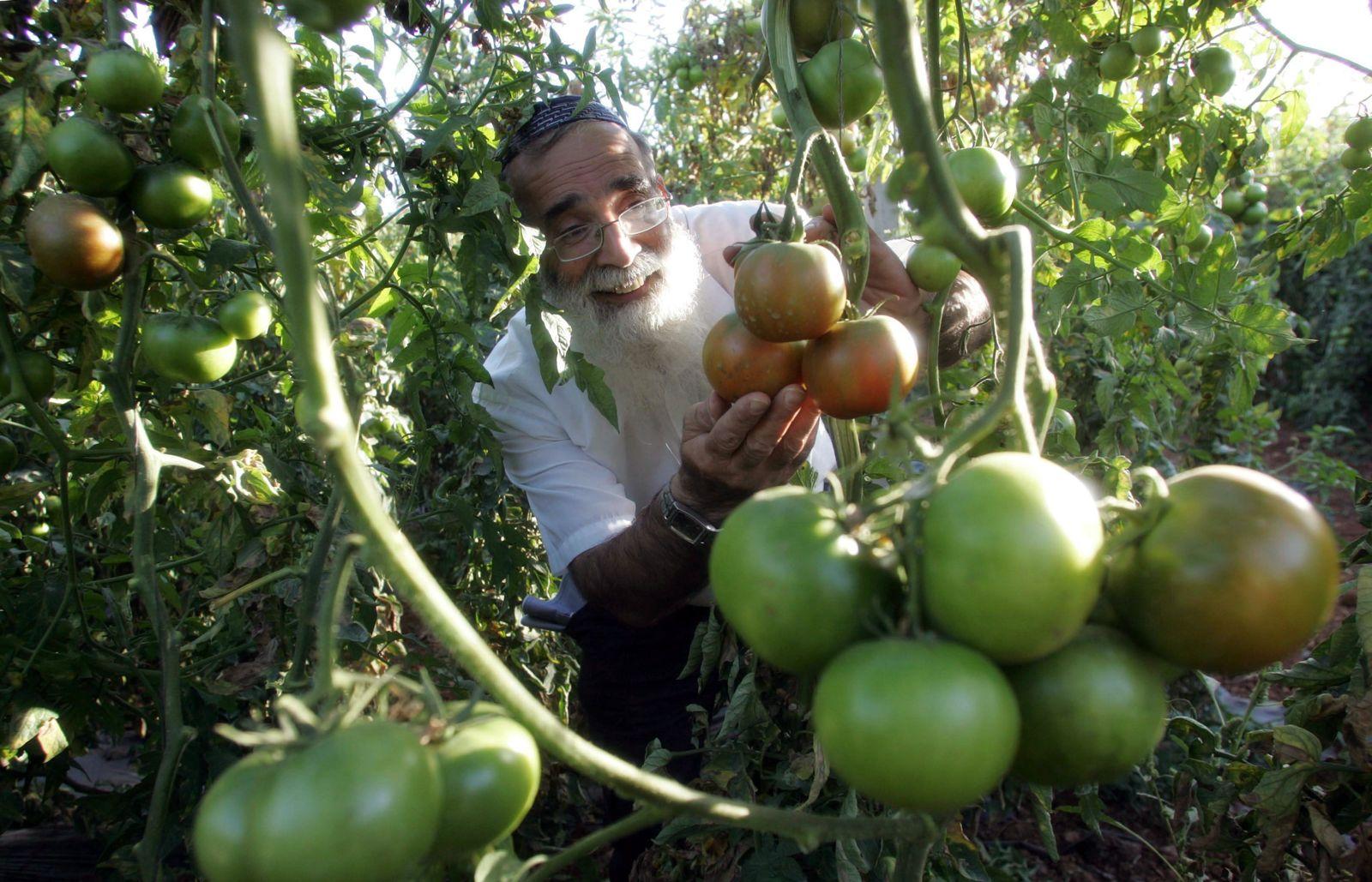 Farmer / Westjordanland