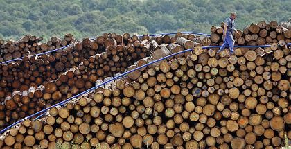 Holzlagerplatz bei Ohrdruf im Thüringer Wald: Fällen, Verbrennen, neu Anpflanzen