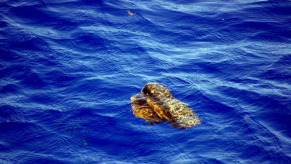 Plastik im Ozean: Auf der Spur des Mülls