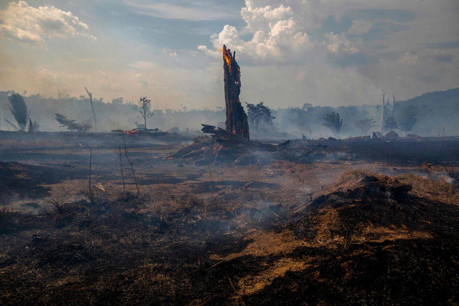 Brasilien/ Waldbrand
