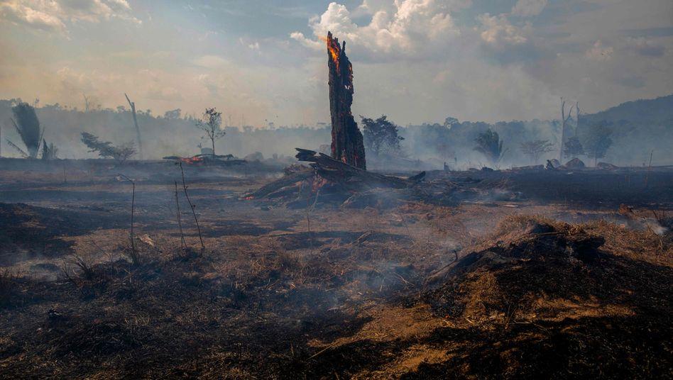 Verbrannter Wald in Altamira in Brasilien