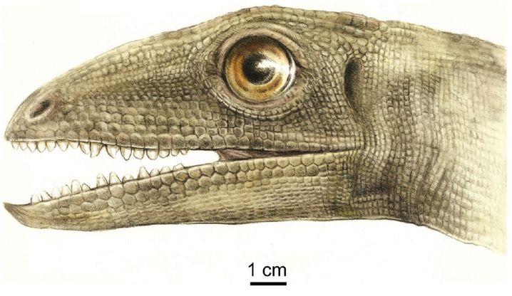 Zeichnung eines Silesaurus: nur rund 15 Kilogramm schwer