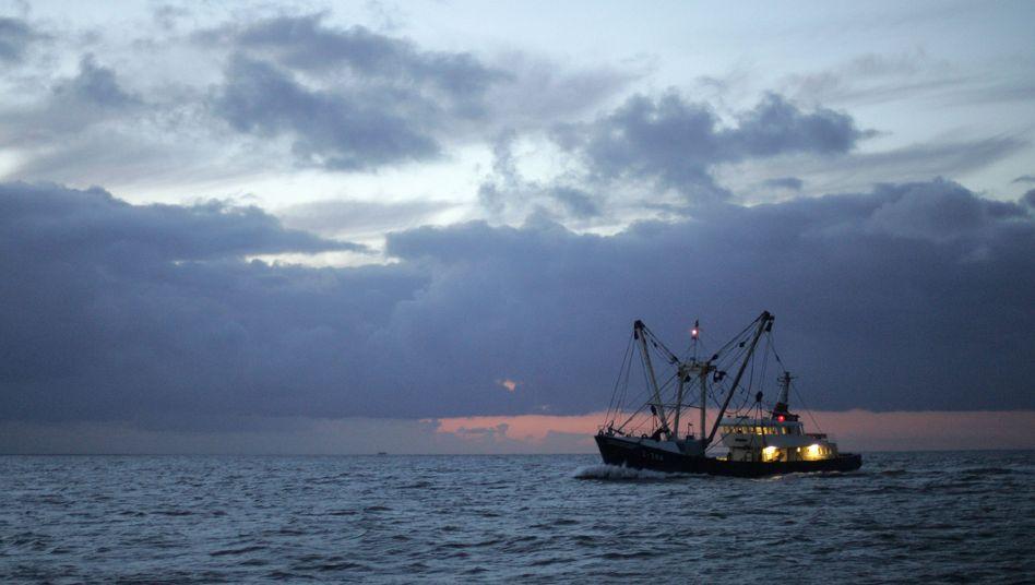 Fischerboot vor der ostfriesischen Insel Borkum: 10.000 Tonnen Seelachs sind erlaubt