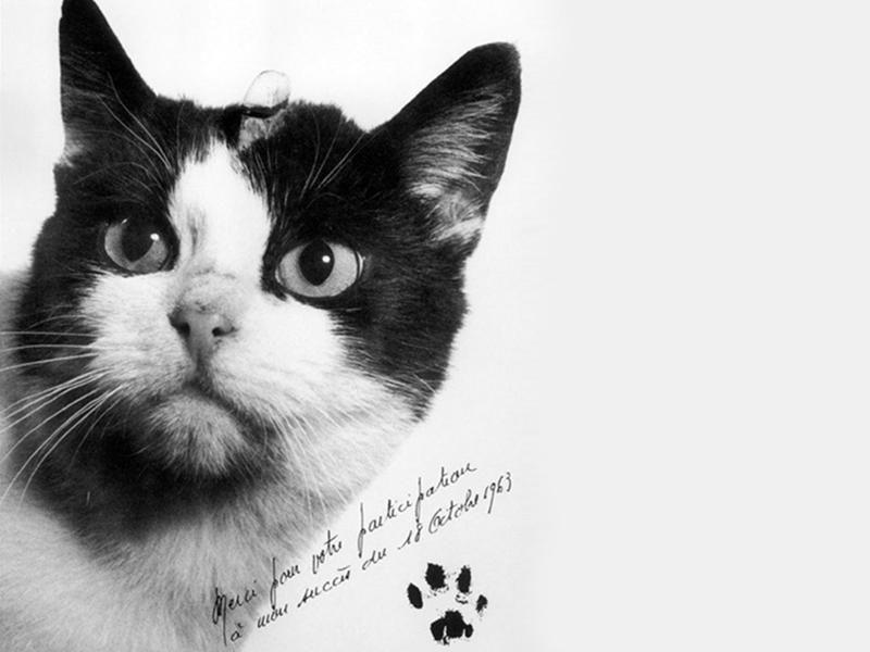 Katze im Weltall