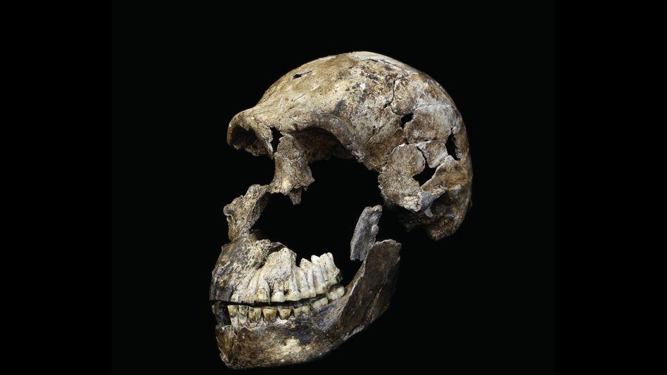 Gestatten, Neo: das Skelett aus der Lesedi-Kammer gilt als vollständigster Fund eines archaischen Menschen.