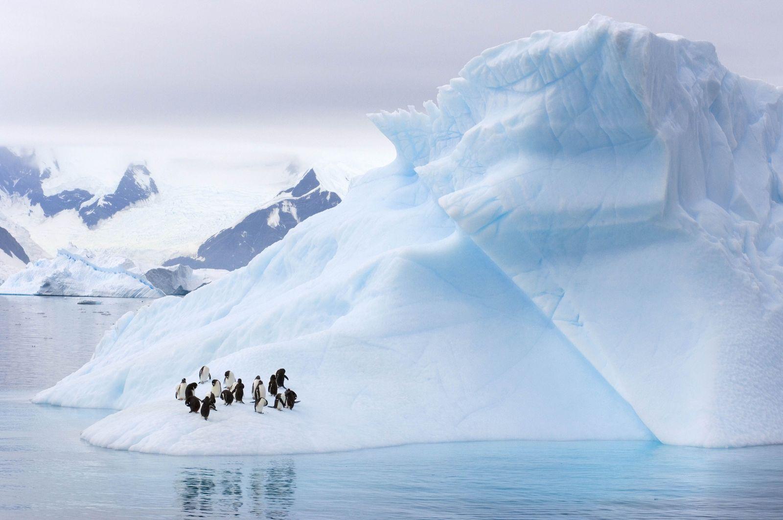 EINMALIGE VERWENDUNG Pinguine Antarktis