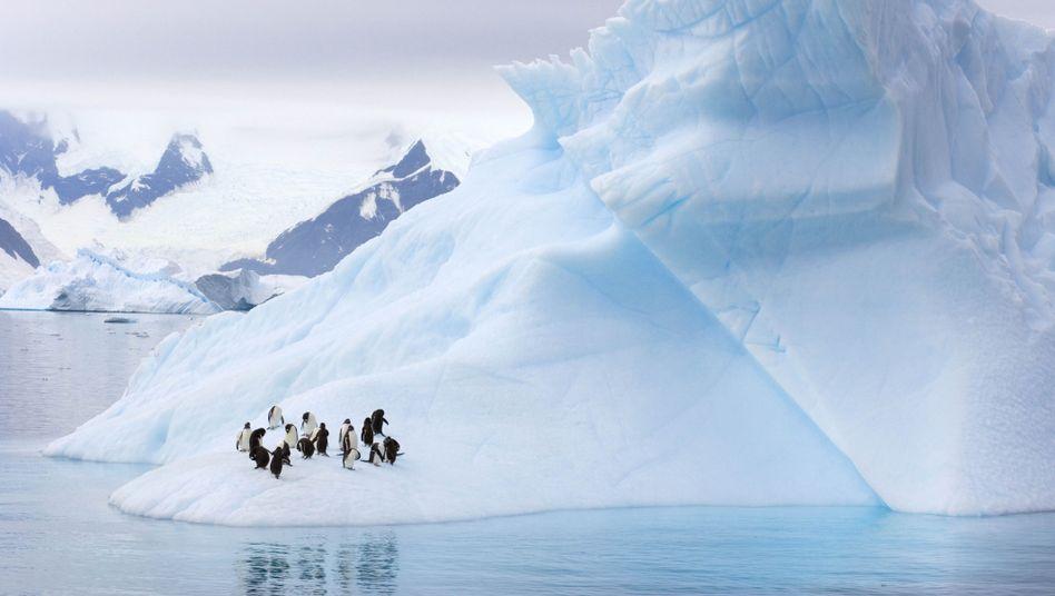 Pinguine auf einem Eisberg in der Antarktis