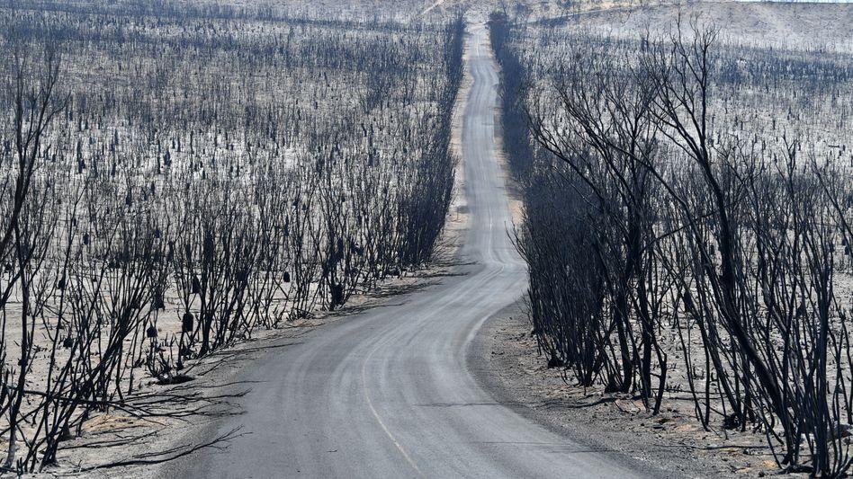 Chase National Park auf Kangaroo Island: Die Brände verwüsteten 12 Millionen Hektar Land