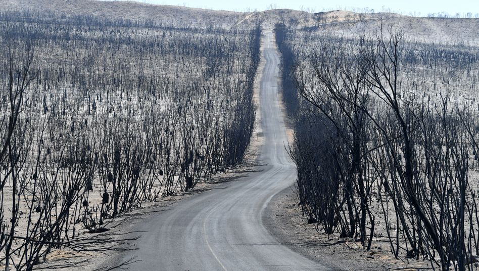 Verbrannte Landschaft auf Kangaroo Island, Bundesstaat South Australia: Das Feuer lässt wenig übrig