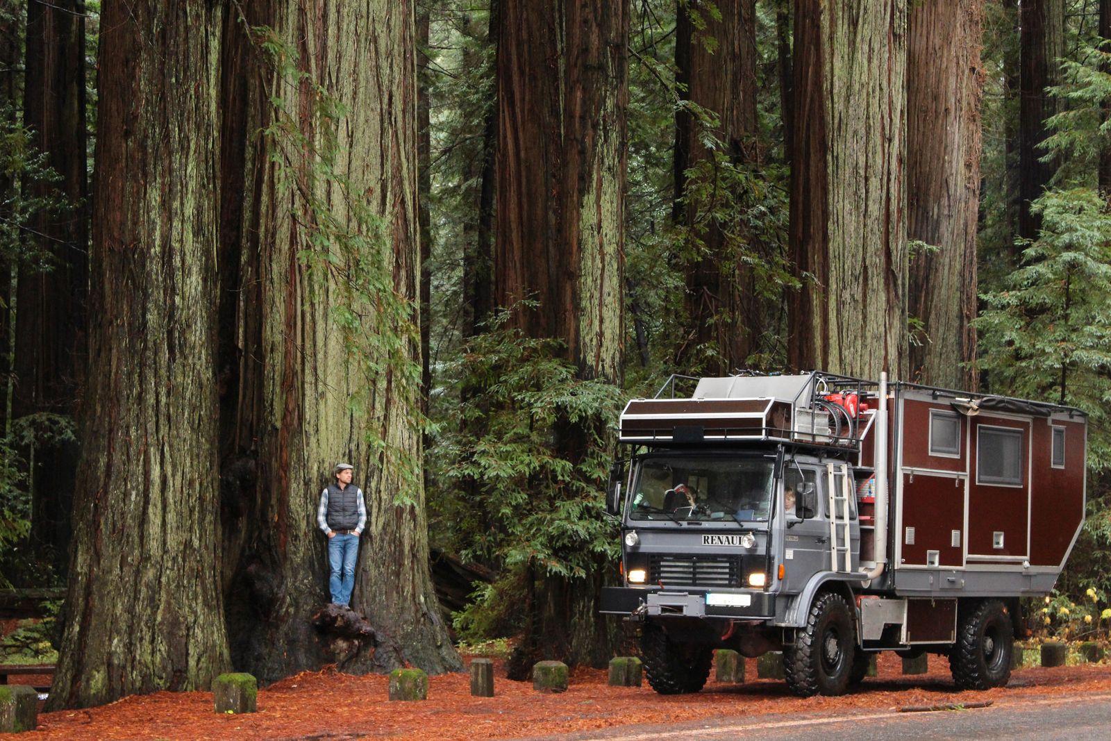 Unterwegs im Redwood Forrest USA_Fotografin_Michaela_von_Bargen