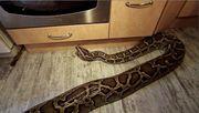 Schmusen mit Schlangen