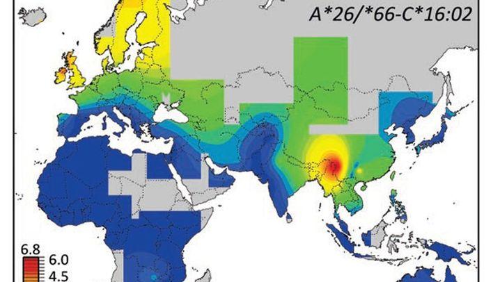 Genvarianten fürs Immunsystem: Neandertaler-Spuren im menschlichen Erbgut