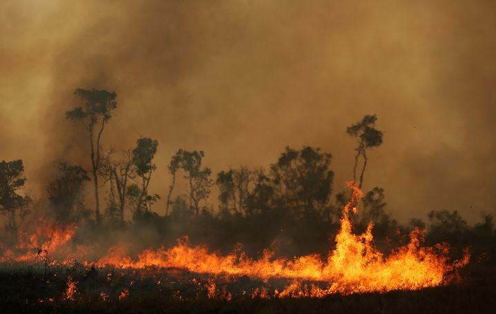 Brennender Regenwald im brasilianischen Amazonasgebiet