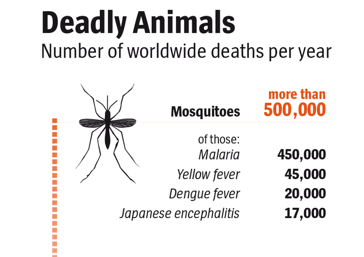 Graphic: Deadly animals