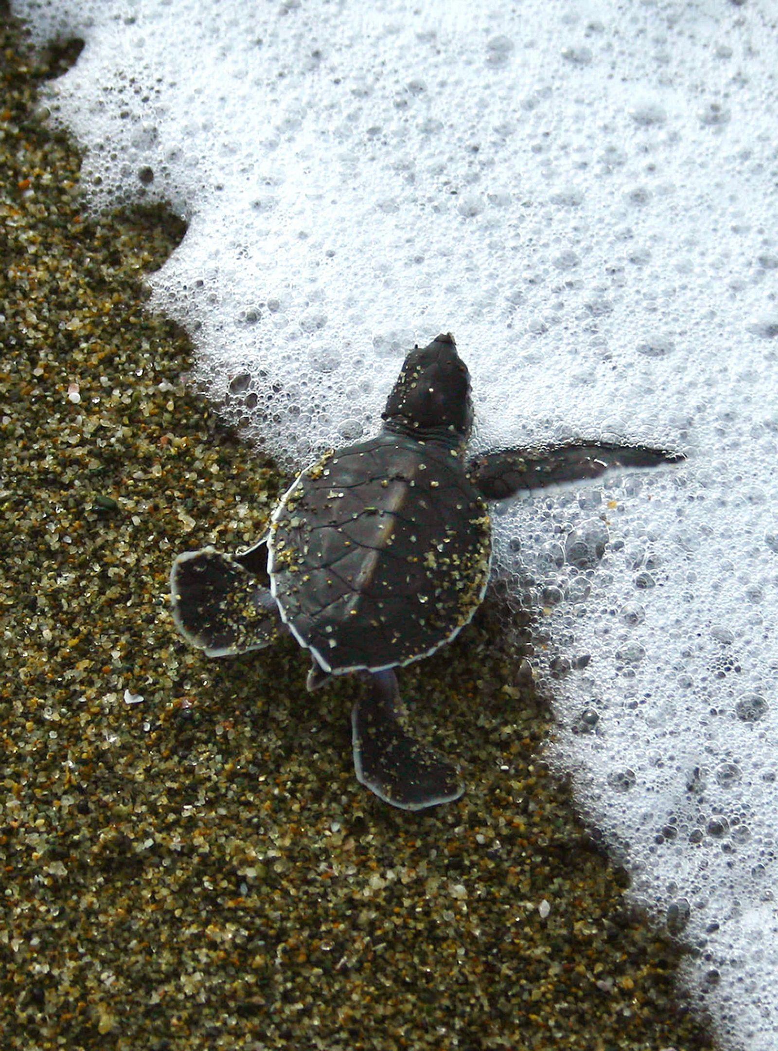 Indonesien / Schildkröte