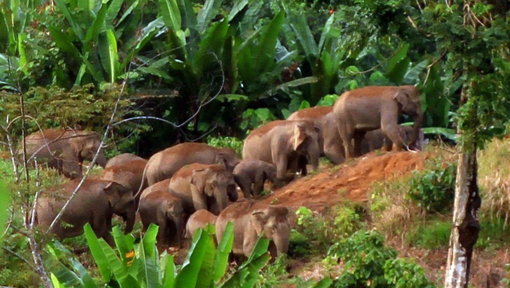 Bedrohte Tiere: Wilderer töten sieben Elefanten