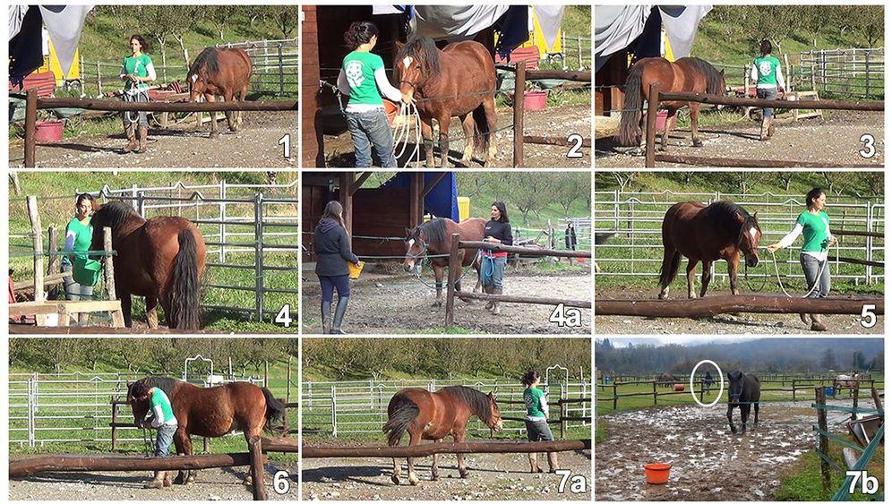 Schlaue Pferde: Was weiß das Gegenüber?
