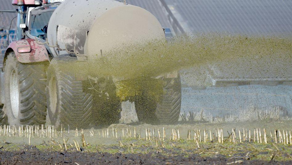Ein Landwirt in Schleswig-Holstein versprüht die Gülle auf einem Feld