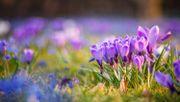 Sorgen Sie jetzt für einen bunten Frühling