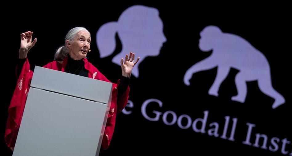 Jane Goodall im Juni 2019 in München: Von der Sekretärin zum Superstar