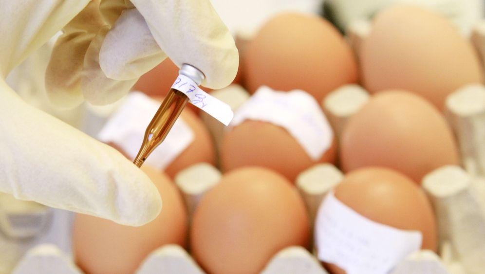 Dioxin im Futter: Verseuchte Lebensmittel?