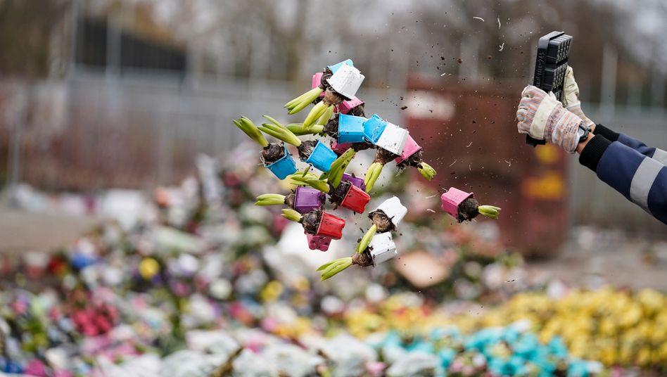 Rund 400 Millionen Blumen landeten im März in den Niederlanden im Abfall