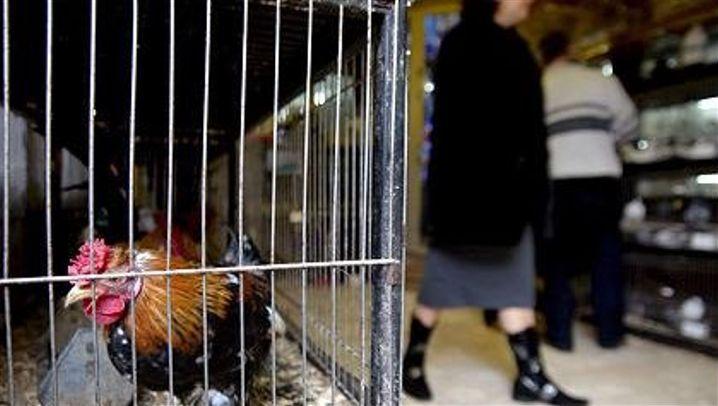 Vogelgrippe: Türkei in Angst vor dem Virus