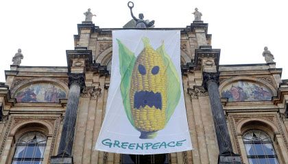 A Greenpeace banner draped over the facade of the Bavarian state parliament protests genetically modified corn.