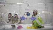 China soll erstmals genveränderte Affen geklont haben
