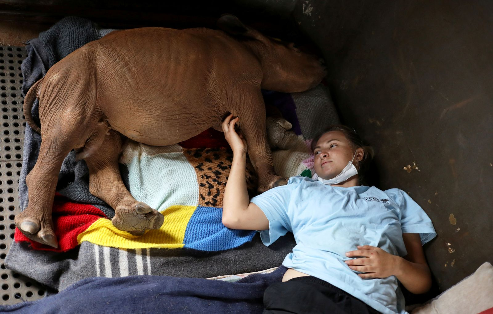 Larize Nel, a volunteer lies next to Mapimpi, an orphaned rhino in Mookgopong