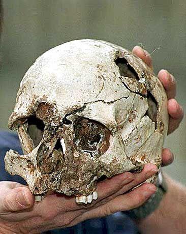 """Steinzeit-Schädel: """"Ein neues Bild des modernen Menschen"""""""