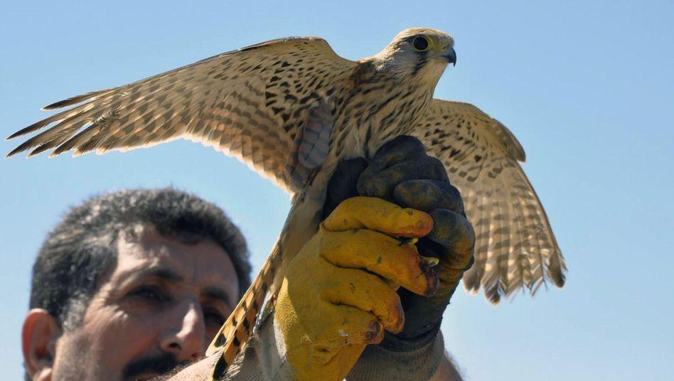 Freiheit für den Falken: Der Vogel war doch nur ein Vogel