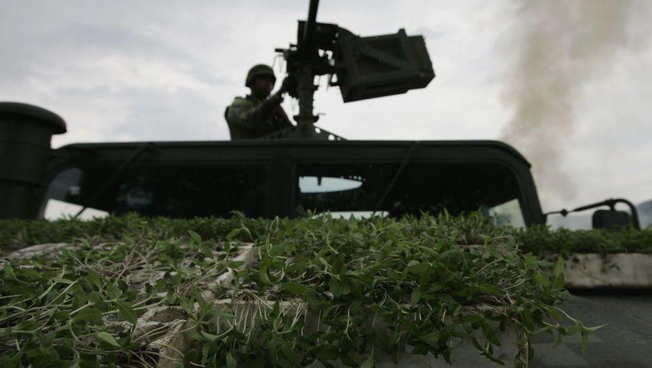 Militärfahrzeug mit Marihuana-Pflanzen: Der Drogenkrieg in Mexiko fordert viele Opfer