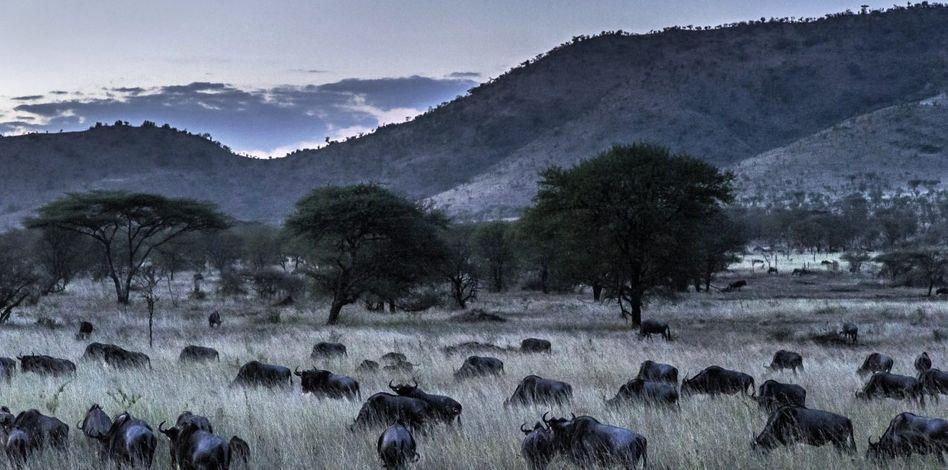 Serengeti-Nationalpark in Tansania