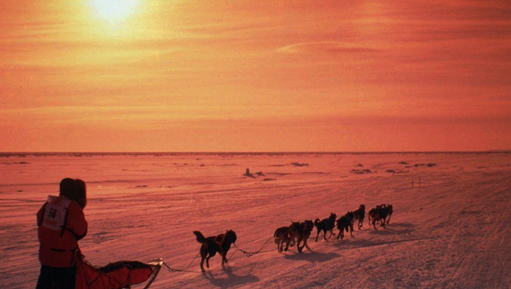 Iditarod-Rennen: 1600 Kilometer durch Schnee und Eis