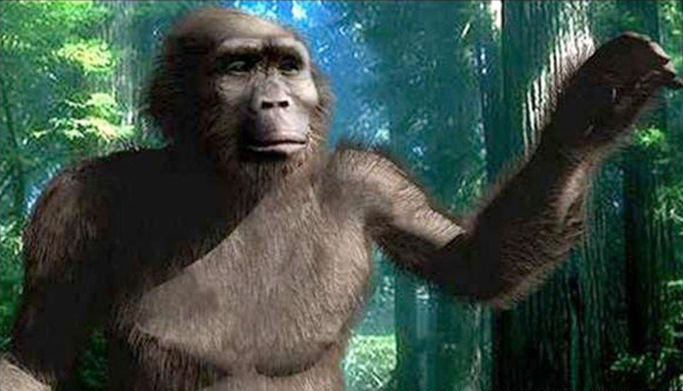 EINMALIGE VERWENDUNG Paranthropus