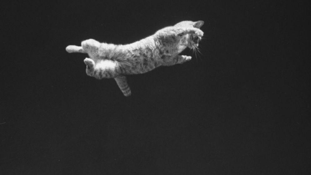 Weltraumforschung: Fallstudie mit Katze