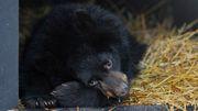 Was wir von schlummernden Bären lernen können