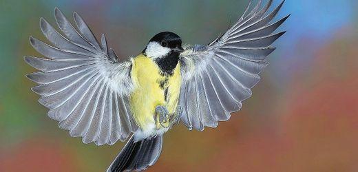 Verkehrsbelastung: Der Straßenlärm lässt Vögel verblöden