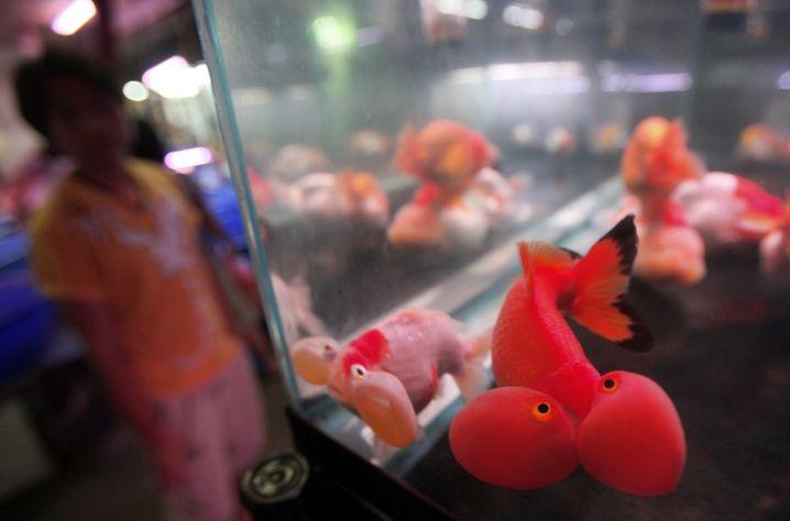 Achtung: Sogenannte Live-Bubbles sind oft schwer einzusaugen, weil sie vor dem Strohhalm immer wieder davonschwimmen.