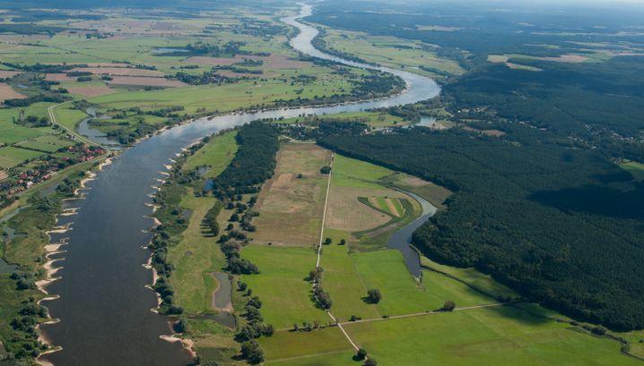 Die Elbe bei Bleckede in Niedersachsen (Archiv)